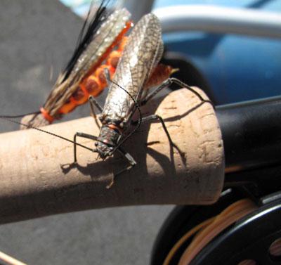 Bugs-rod.jpg