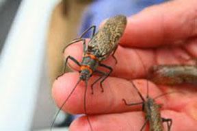 bugs-on-jpg